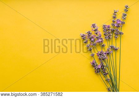Fresh Lavender Flowers Bouquet On Yellow Color Background. Flatlay Purple Herbal Flower Blossom. Bou