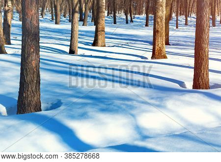 Winter forest landscape with snowy forest winter trees. Colorful winter forest park, winter forest nature park scene in sunny weather. Winter forest landscape