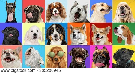 Modern. Young Dogs, Pets Collage. Cute Doggies Or Pets Are Looking Happy Isolated On Multicolored Ba