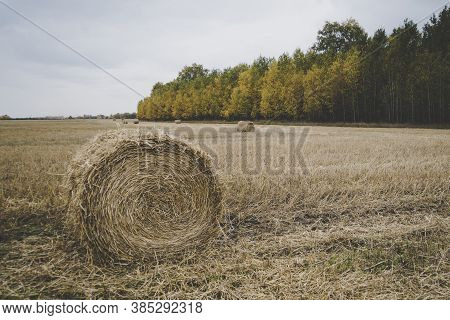 Farm Field With Hay Bales. Autumn Harvest. Beveled Straw On The Background Of The Forest With Colorf