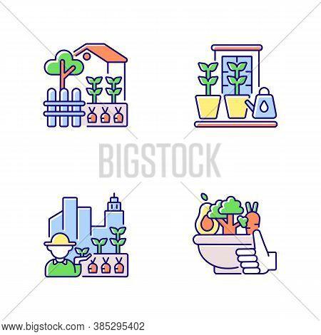 Hobby Farming Rgb Color Icons Set. Backyard Garden. Watering Plants In Pots On Windowsill. Urban Agr
