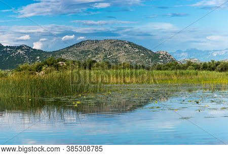 View The Coast Of Skadar (shkoder) Lake, Overgrown With Grass, With Reflection Of Mountains In The W