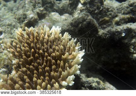 Colorful Corals In The Sea Of Togian Islands