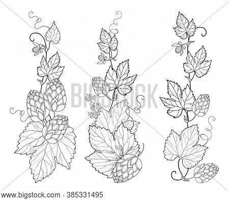 Vector Set With Vertical Bunch Of Outline Hop With Leaf, Cones And Flower In Black Isolated On White