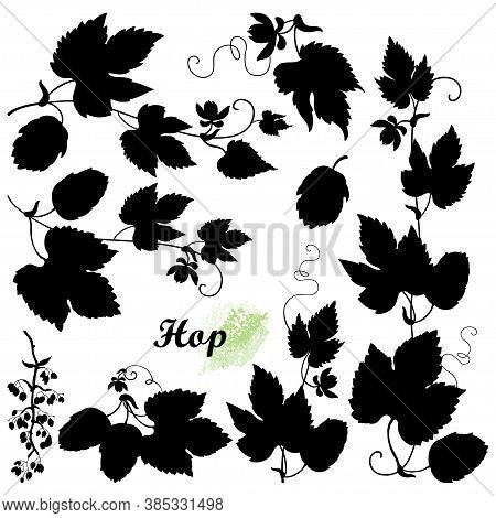 Vector Set With Bunch Silhouettes Of Hop With Leaf, Cones And Flower In Black Isolated On White Back