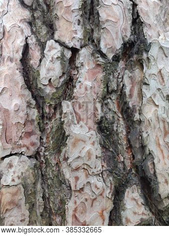 Textured Bark Of A Tree. Wooden Texture