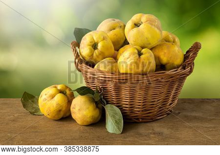 Ripe Fruits Of The Quince Tree In A Basket. Fruit Harvest. Fruit Harvest.