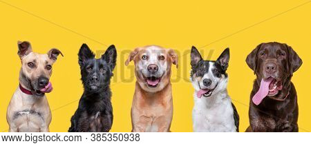 cute shelter dogs in an outdoor shot