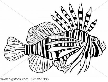 Illustration Of Red Lionfish Isolate On White Background.vector Illustration.