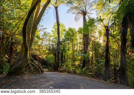 Walking Track Through Native New Zealand Bush With Large Tree Root Ball Growing Over Large Rock On P