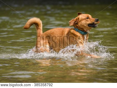 Adorable Dog Playing In The Water And Enjoying The Warm Weather. Lots Of Water Splashing Around As T
