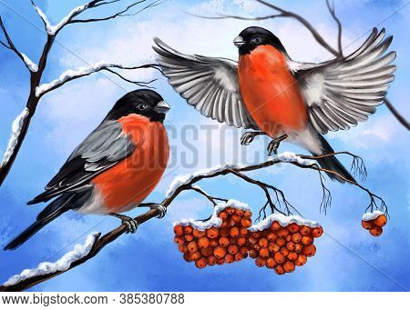 Birds Bullfinches On A Branch Of Ashberry, Winter, Art Illustration Painted With Watercolors