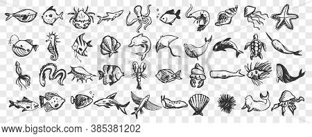 Marine Life Doodle Set. Collection Of Hand Drawn Templates Sketches Patterns Of Different Sea And Oc