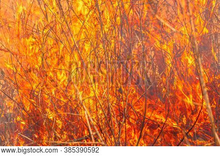 Violent Fire In Nature. Bright Fire Outdoors That Extends Like Wildfire. Emergency Situation. Blazes