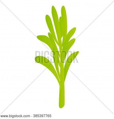 Rosemary Branch Icon. Cartoon Of Rosemary Branch Vector Icon For Web Design Isolated On White Backgr