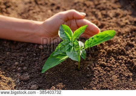 Human Hand Holding Young Plant Growth In Soil. Plant, Tree As Symbol Of Start New Life, Care About N