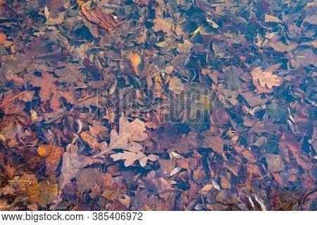 autumn leaves under water, nature textue