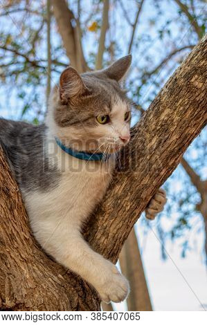 grey cat stranded in the branches of a tree