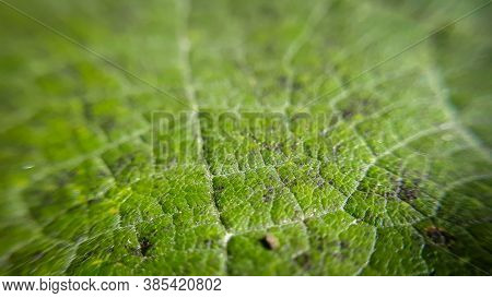 Closeup Leaf Background. Abstract Macro Plant Pattern. Botany Texture.