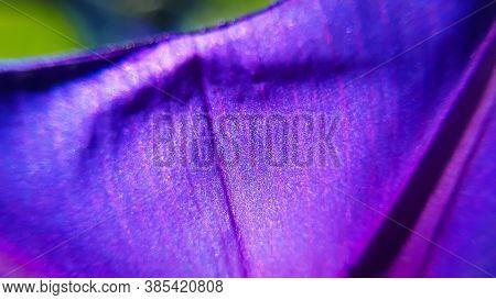Extreme Closeup Macro Of Purple Flower Petal. Spring Time