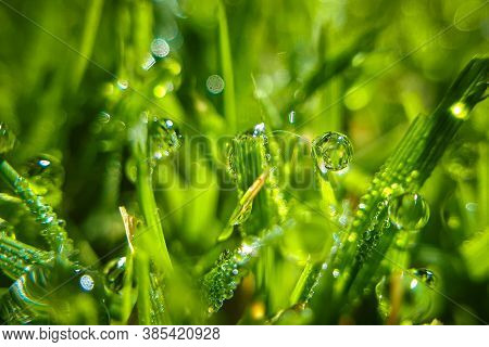 Macro Drops Of Dew On Green Grass. Morning Condensation On Lawn. Closeup Wet Meadow Background.