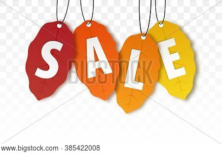 Autumn Sale. Vector Fall Leaf Isolated. Bright Fall Leaves. Autumn Discount Banner. Season Sales Tem
