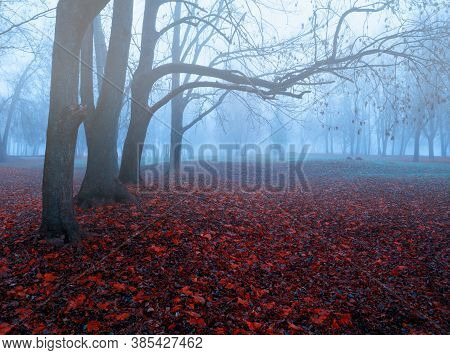 Autumn forest landscape. Foggy autumn forest with bare fall trees and fallen red autumn leaves on the ground, misty fall park scene
