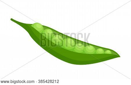 Isolated At White Background Opened Green Pea Pod With Round Plump Peas. Natural Organic Vegetable F