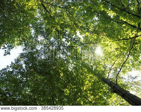 View Into The Treetops With The Sun As Backlight, Natural Background, Concept For Natural Recreation