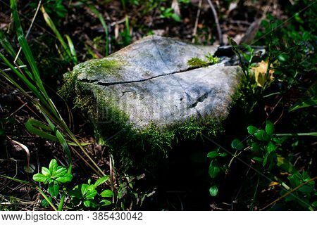 Animal Skull In The Green Grass In The Forest. Elk Skull Covered With Green Moss.