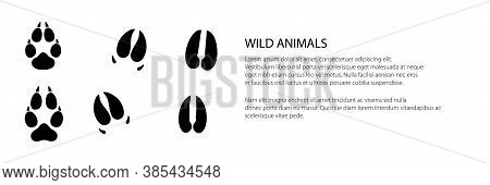 Banner Of Track Of Forest Animals, Traces Of A Roe Deer And A Boar And A Wolf , Vector Illustration