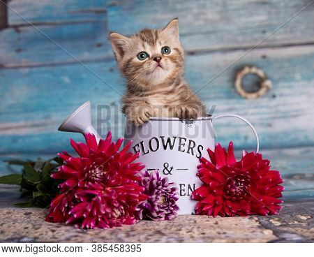 Portrait of beautiful fluffy brovn kitten playing. Cat, animal baby, kitten and flowers