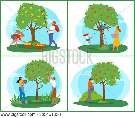 People Picking Apples, Tree With Ripe Fruit, Farmer With Basket Near Wood, Orchard Symbol. Person In
