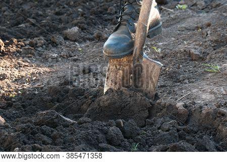 Cultivation, Digging Soil With A Garden Shovel, Farmers Leg Close-up.