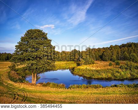 Summer Background With Alder Tree On Riverbank. Sunny September Day.