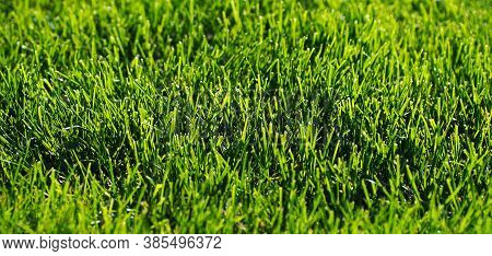 Close-up Of A Mown Lawn. Abstract Natural Background. Copy Space. Selective Focus Close-up To Abstra