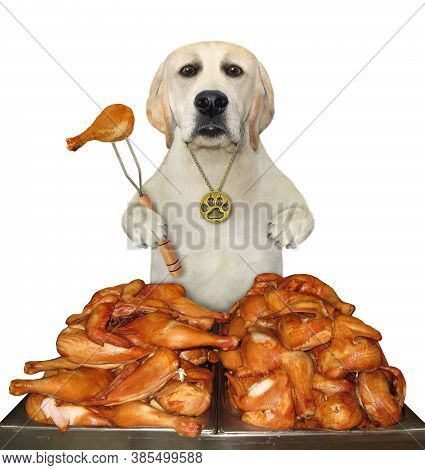 A Dog With A Fork Is Eating A Fried Chicken Legs From A Square Metal Tray. White Background. Isolate