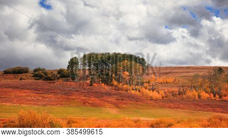 Aspen trees in the middle of meadow in Colorado country side