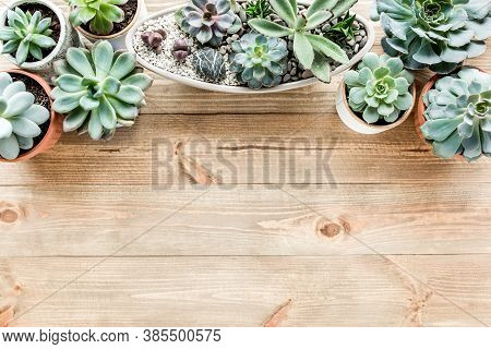 Floral Frame With Succulents Minimal Creative Berry Arrangement Pattern On Wooden Background. Flat L