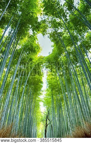 Pictureque Sagano Bamboo Forest In Japan.