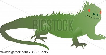 Iguana A Large Lizard Green Color On White Background Isolate