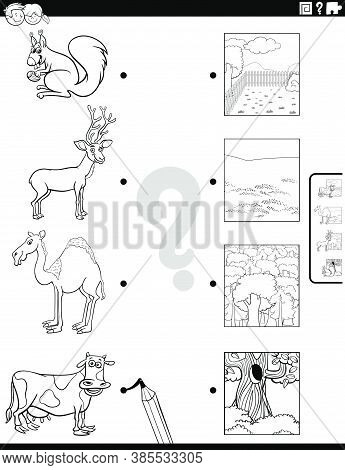 Black And White Cartoon Illustration Of Educational Matching Game For Children With Animal Species C