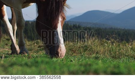 Brown Horse Grazing Eating Grass Summer Sun Tail Swish Slow Motion