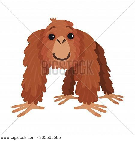 Orangutan Ape As Arboreal African Animal Vector Illustration