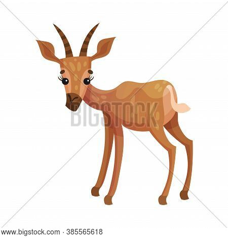 Gazelle Or Antelope With Horns As African Animal Vector Illustration
