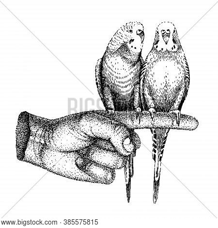 Two Parrots Sit On The Index Finger. Vector Sketch With Birds In Retro Style. Vintage Black And Whit