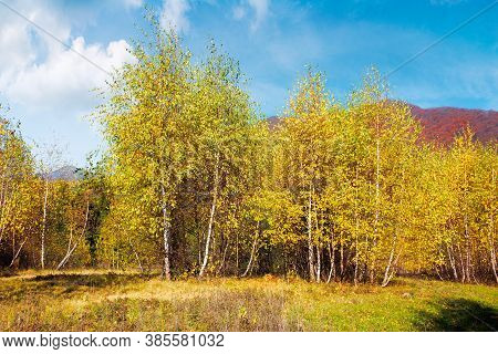 Birch Trees In Mountainous Landscape. Yellow Foliage On The Branches. Beautiful Nature Scenery Of Uz
