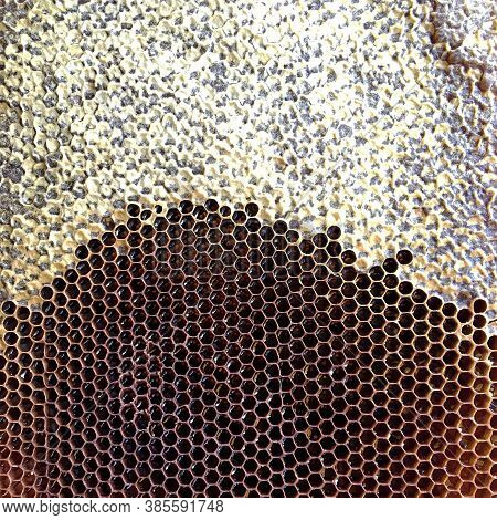 Abstract Hexagon Structure Is Honeycomb From Bee Hive Filled With Golden Honey. Honeycomb Summer Com