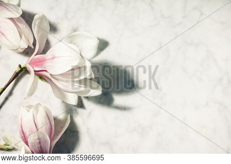 Beautiful pink magnolia flowers on white marble table. Top view. flat lay. Spring minimal concept.