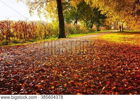 Autumn landscape. Autumn trees along the autumn park alley in sunny autumn weather. Autumn sunset park scene, autumn picturesque landscape. Autumn nature view